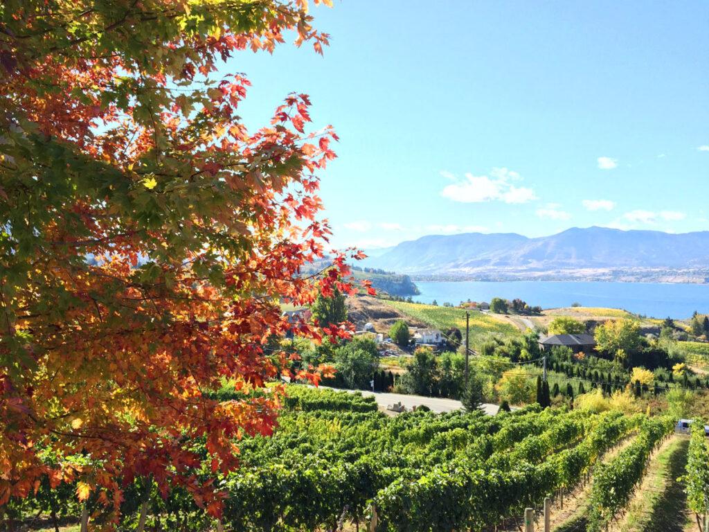 Autumn Okanagan Lake vineyard view