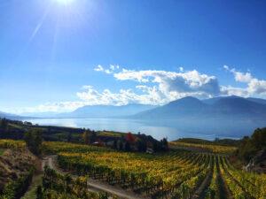 Beautiful autumn vineyard view with misty lake