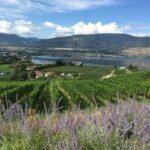 Overlooking a vineyard, Okanagan Lake, and Penticton.