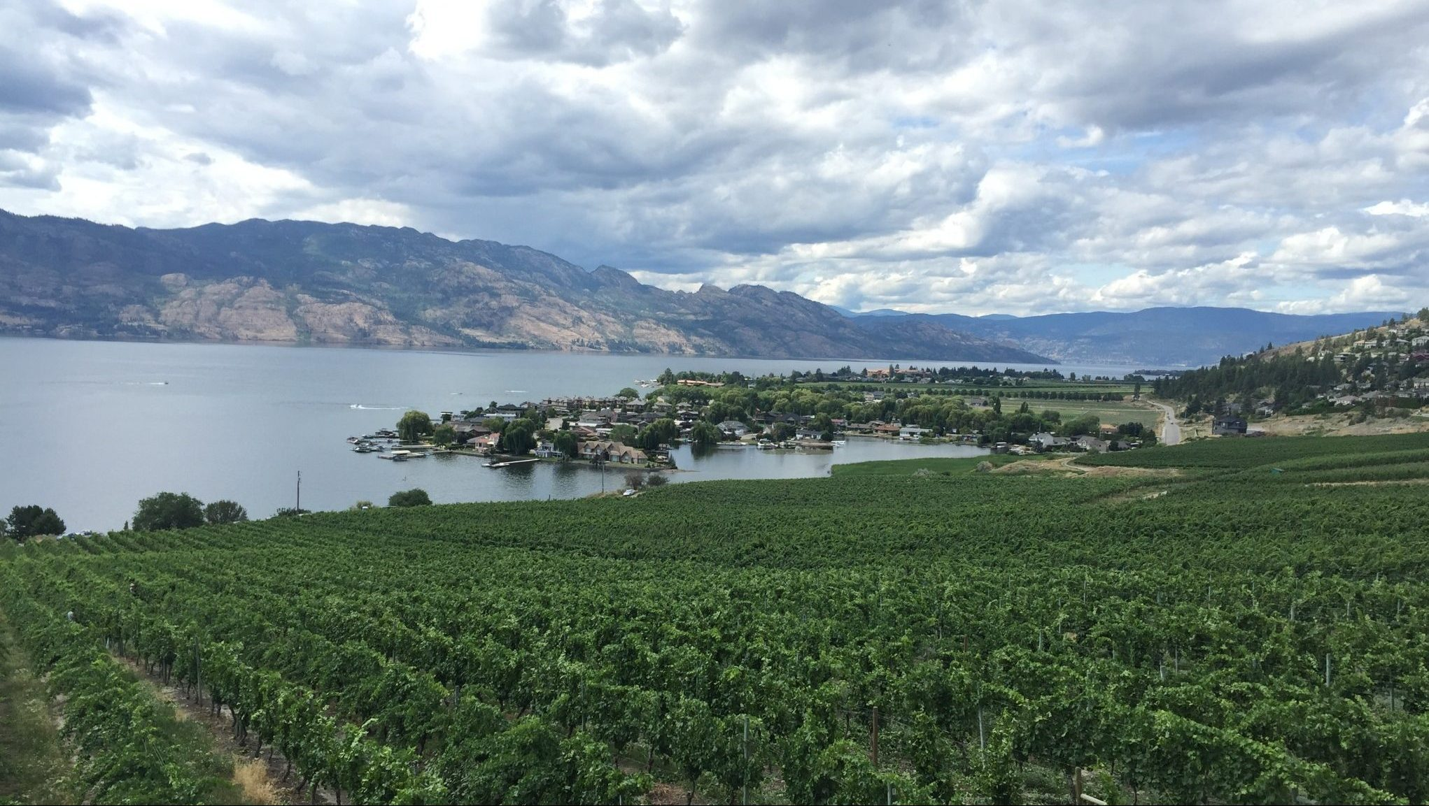 The view of Quails' Gate's vineyard in West Kelowna.