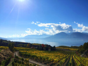 Beautiful autumn vineyard view with misty lake