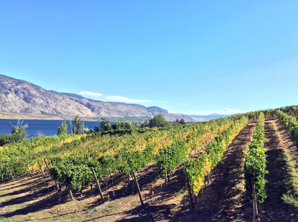 Vineyard lake autumn view