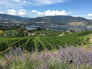 Overlooking a vineyard, Okanagan Lake, and Penticton.