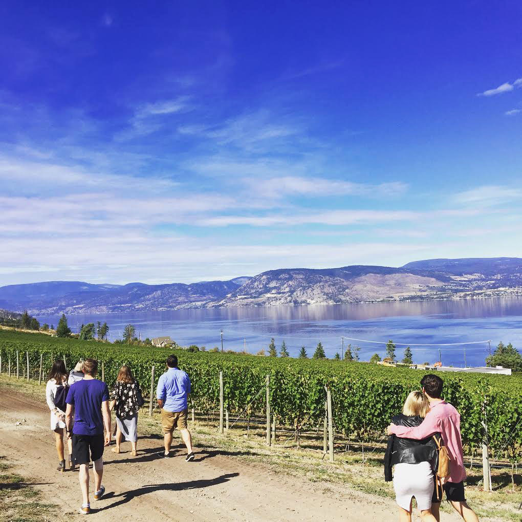 Okanagan wine tour through the vineyard